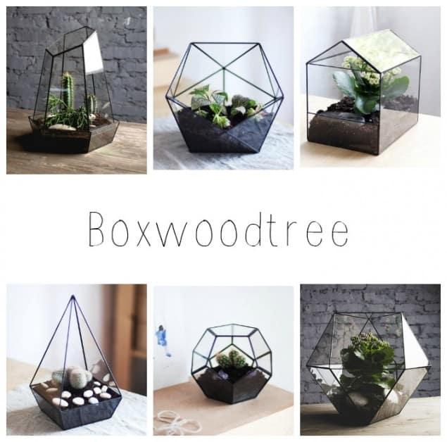Boxwoodtree Terrariums
