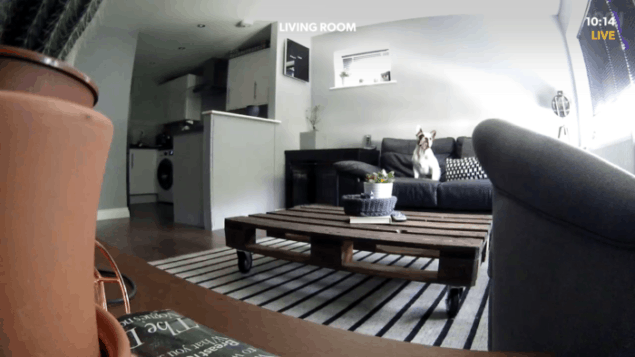 Screenshot from Canary all-in-one home security system