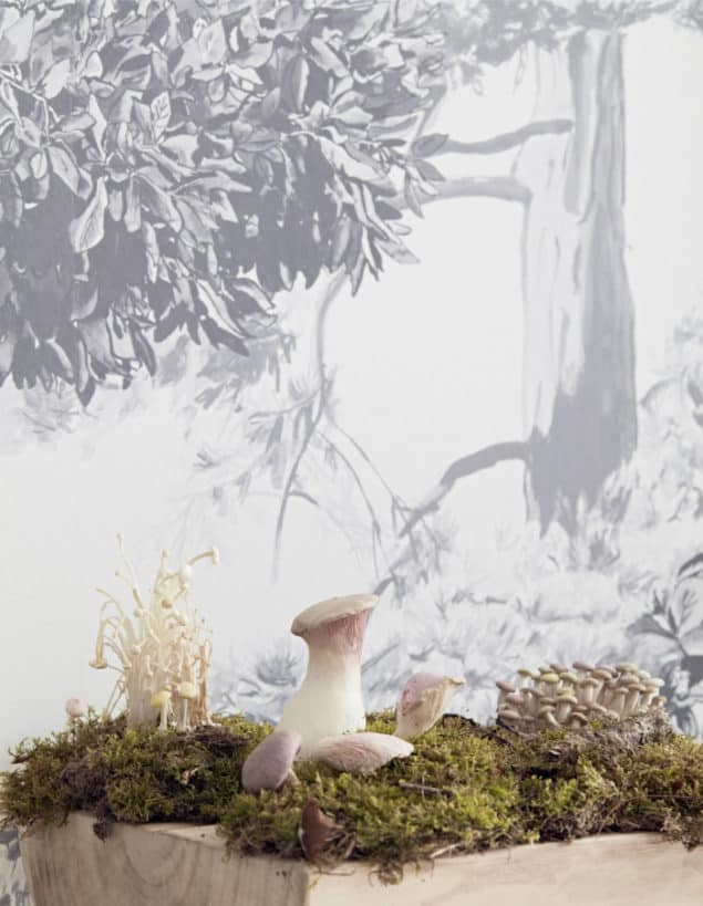 sian zeng hua trees wall mural close up with mushrooms