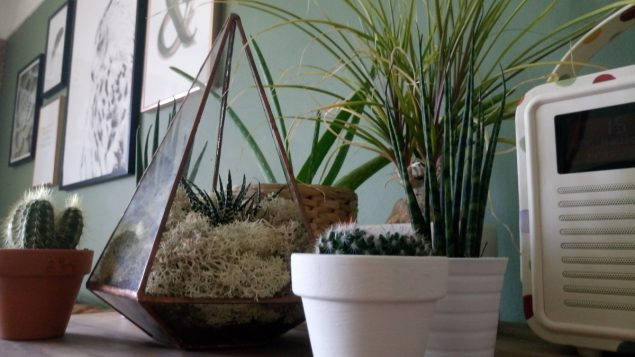 The Urban Botanist Copper Terrarium 6