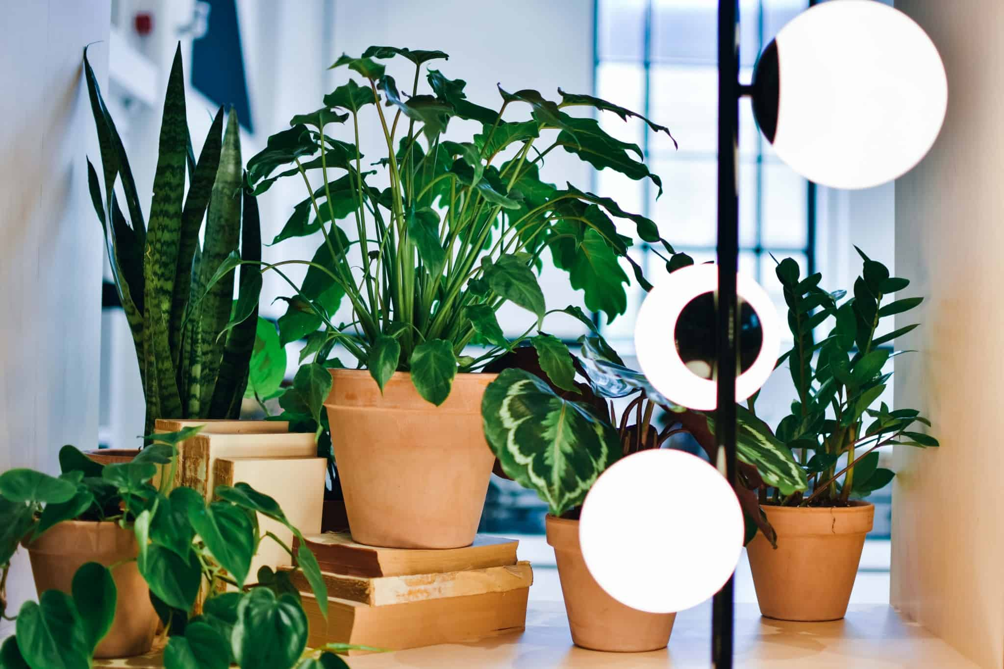THIS Workspace coworking space in Bournemouth - plants