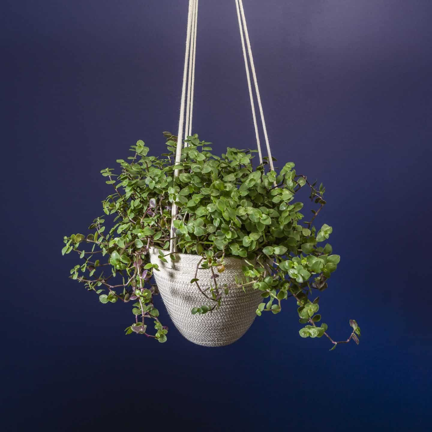 Martha & Me artisan collection - hanging planters