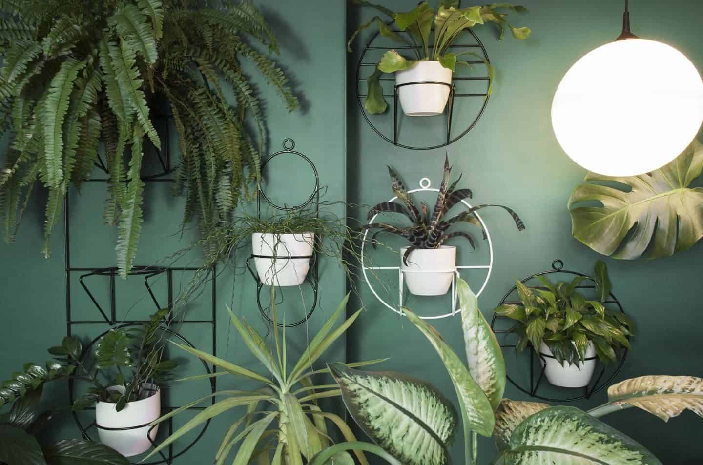 Minimalist design-led plant holders from Polish design studio Bujnie