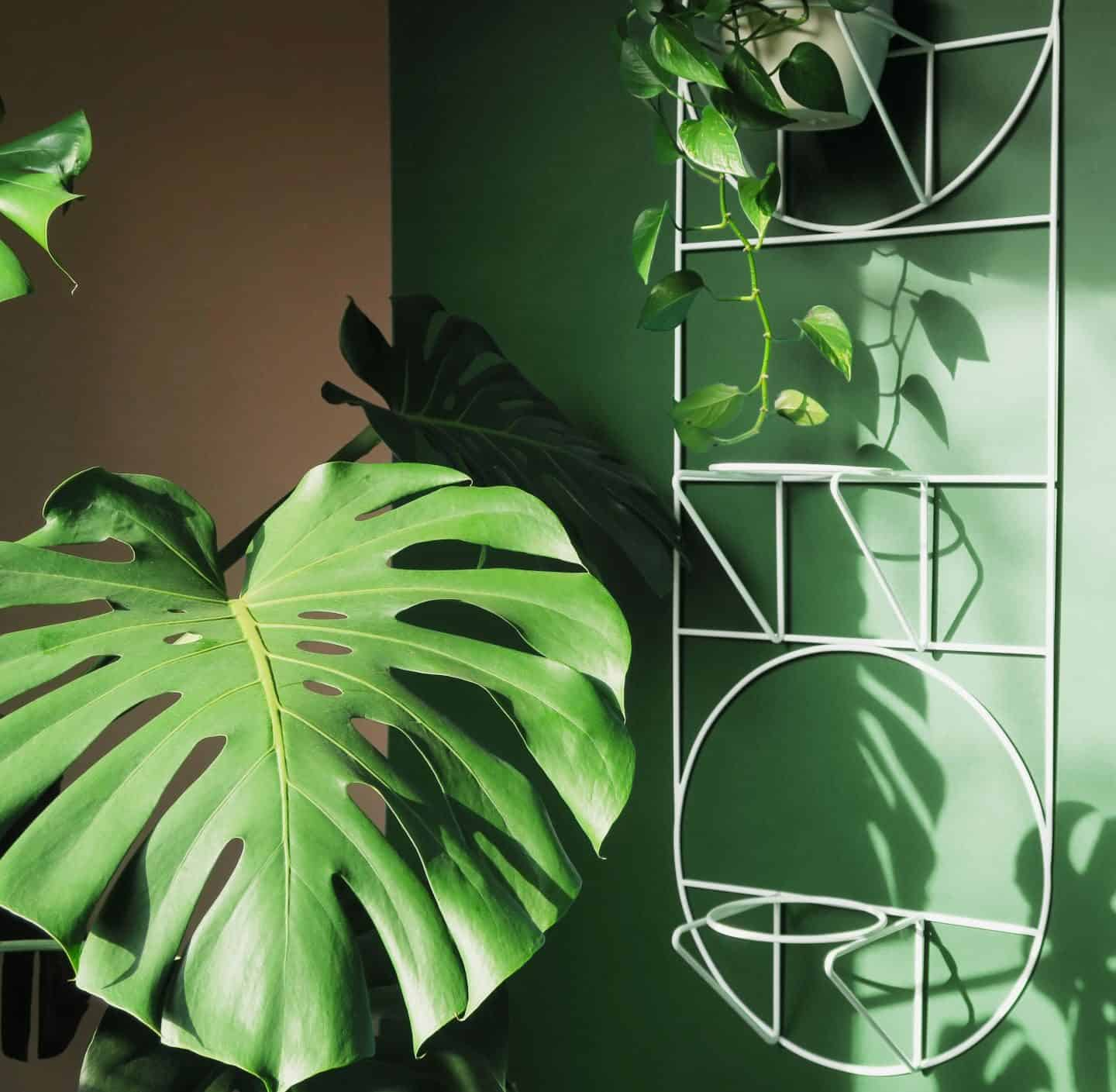 Minimalist design-led plant holder by bujnie mounted on the wall