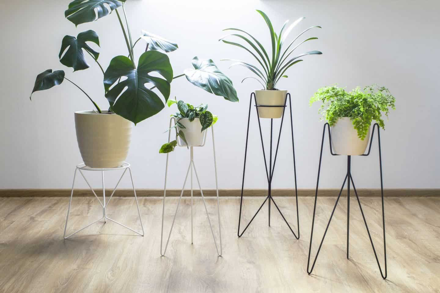 Minimalist design-led plant holders and stands from Polish design studio Bujnie