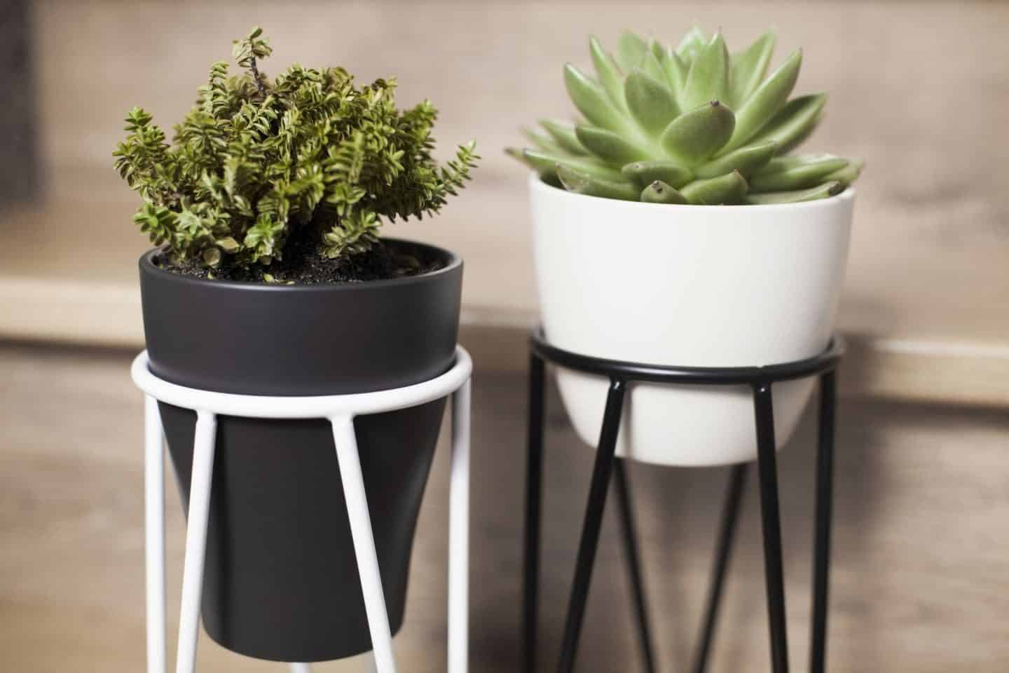 Minimalist design-led plant stands from Polish design studio Bujnie