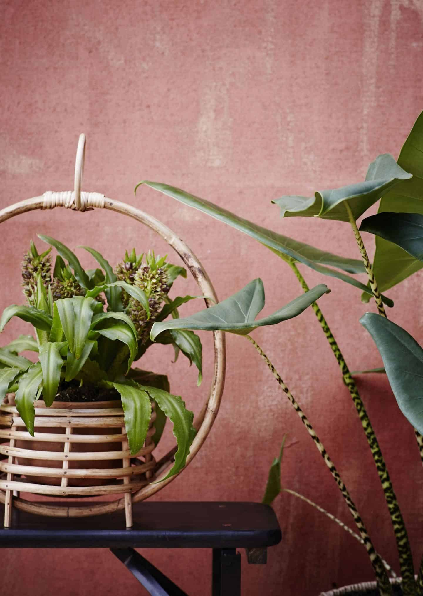 Bohemian Style from Madam Stolz with plants in bamboo holders