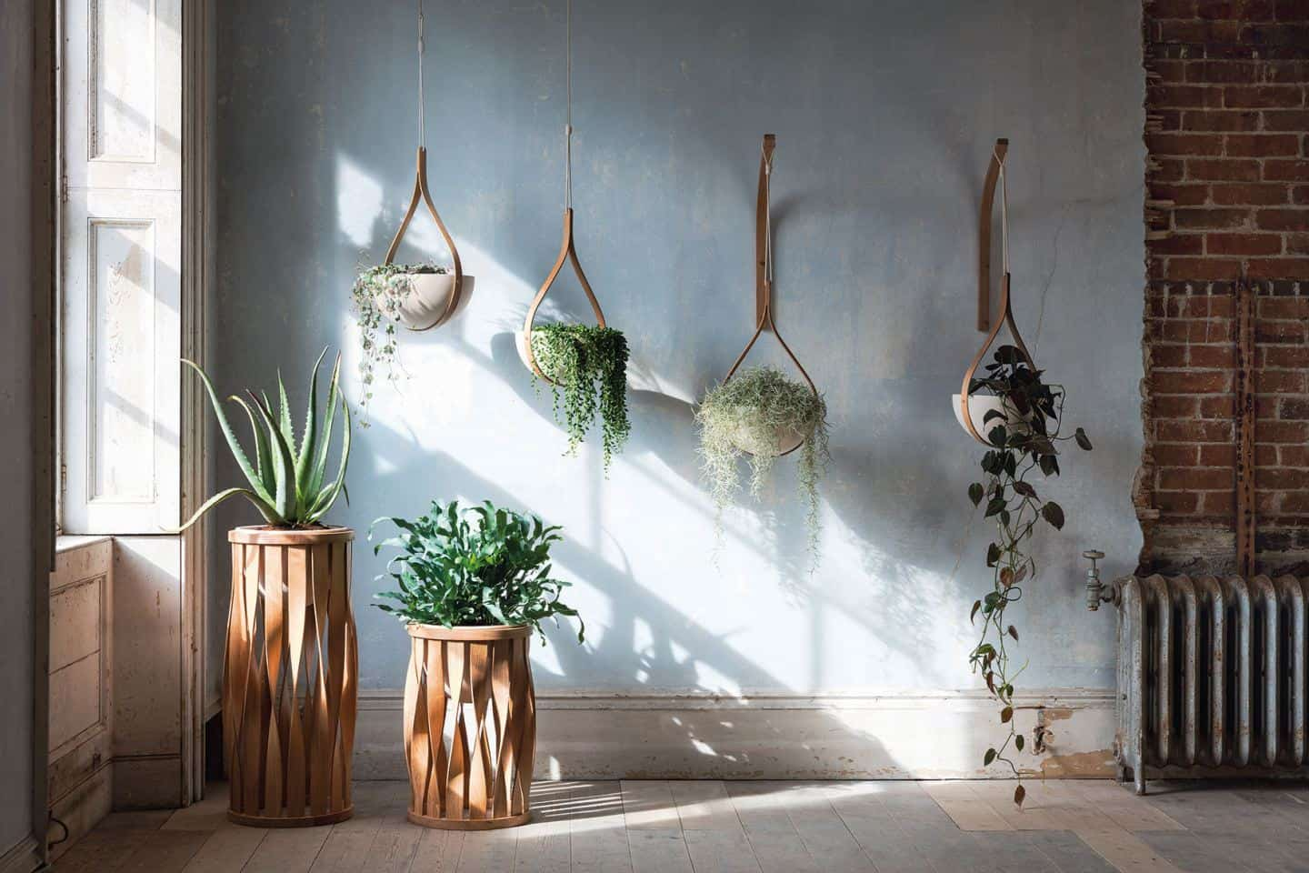 Quirky Planters - Morvah Ceiling Hanging Planter by Tom Raffield