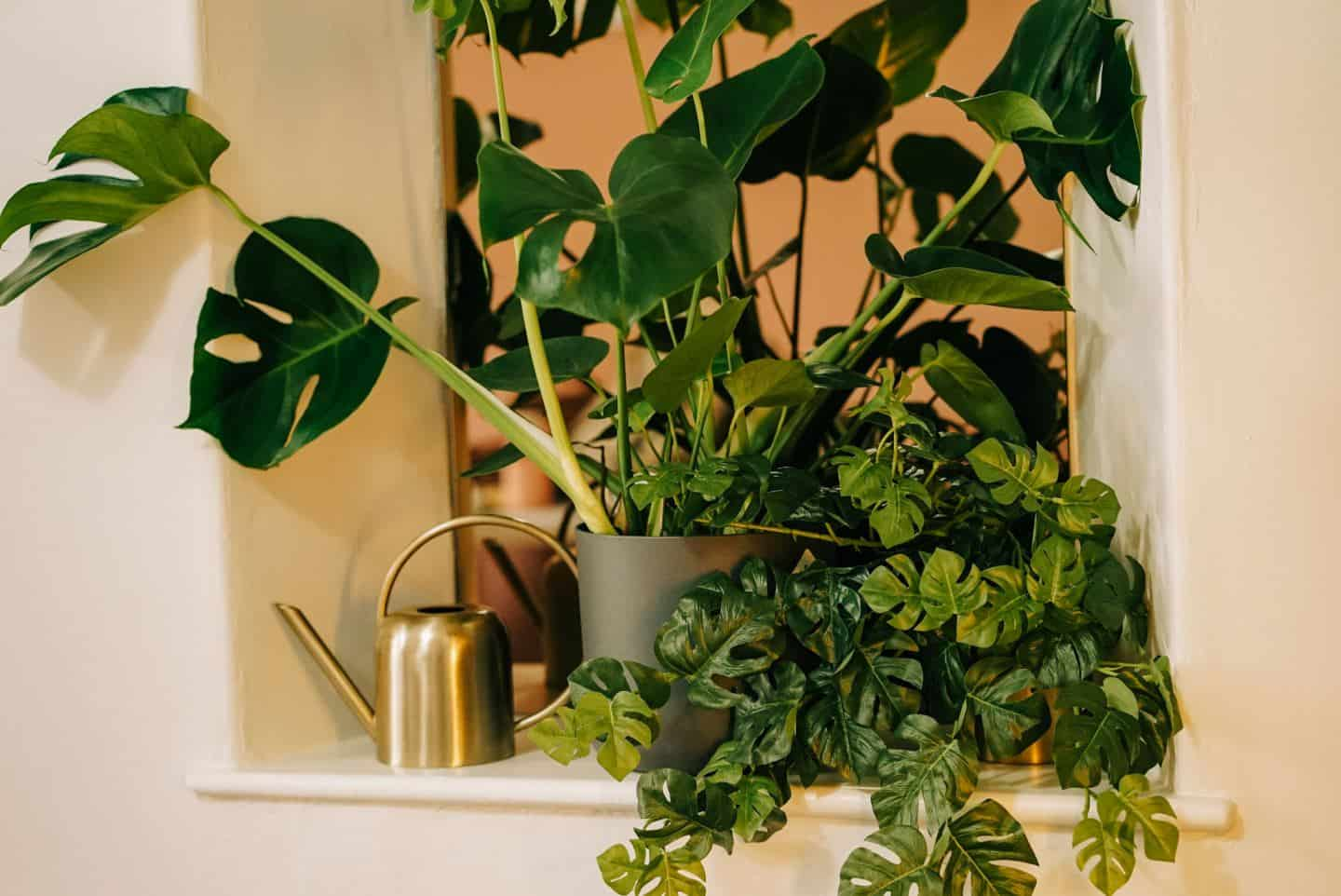 Real and faux plants at The Tribe, a coworking space for female entrepreneurs in Totnes, Devon