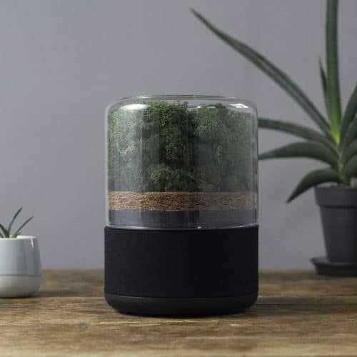 Briiv sustainable and natural air purifier on a table next to some plants