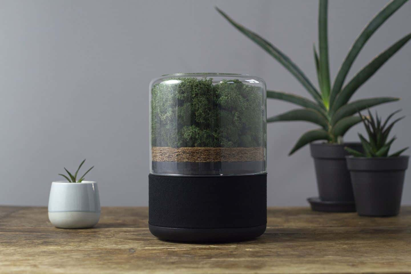 The Briiv sustainable and natural air purifier on a wooden surface surrounded by plants