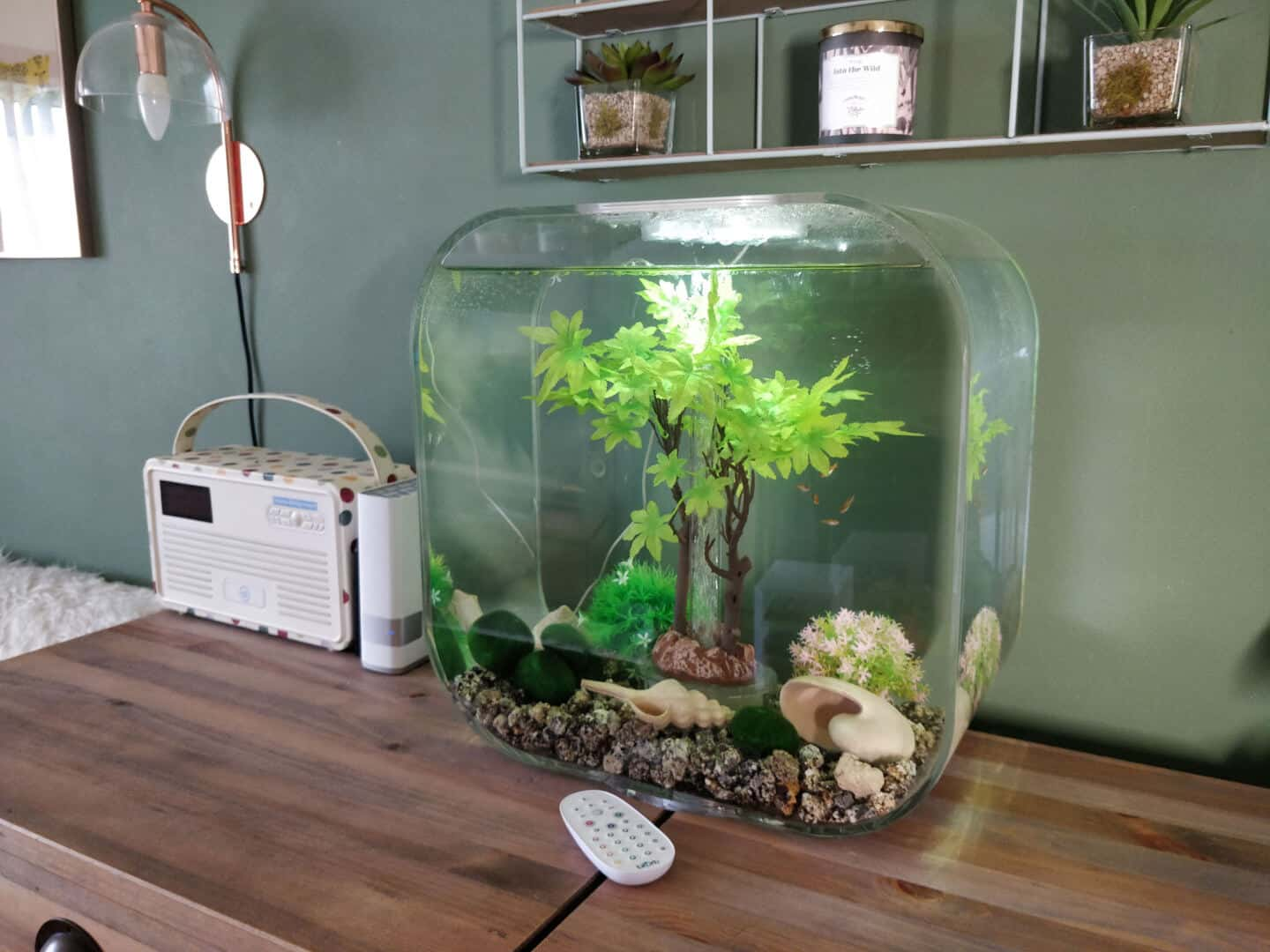 30l biOrb Life fish tank on a sideboard in a living room with green walls behind